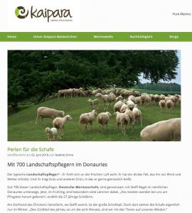 Kaipara Blog